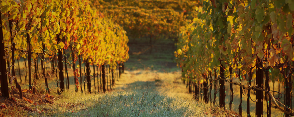 Sonoma Vineyard and Ranch Real Estate Blog